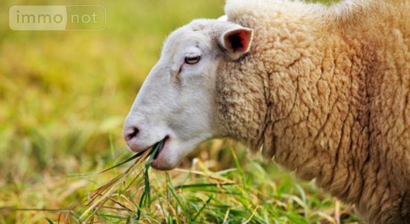 Bien agricole a vendre Pouldreuzic 29710 Finistere  10720 euros