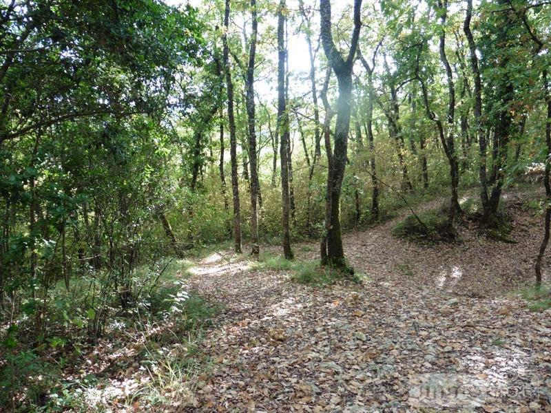 Terrains de loisirs bois etangs a vendre Auch 32000 Gers 76200 m2  48400 euros