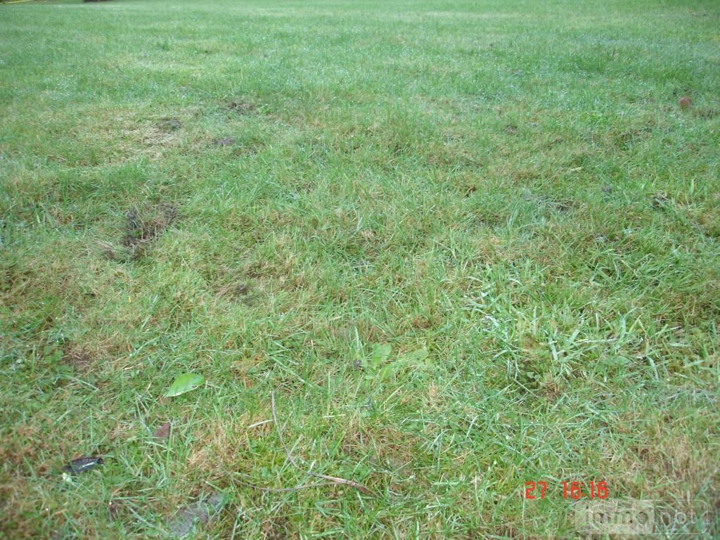 Terrain a batir a vendre Langonnet 56630 Morbihan 1145 m2  21200 euros