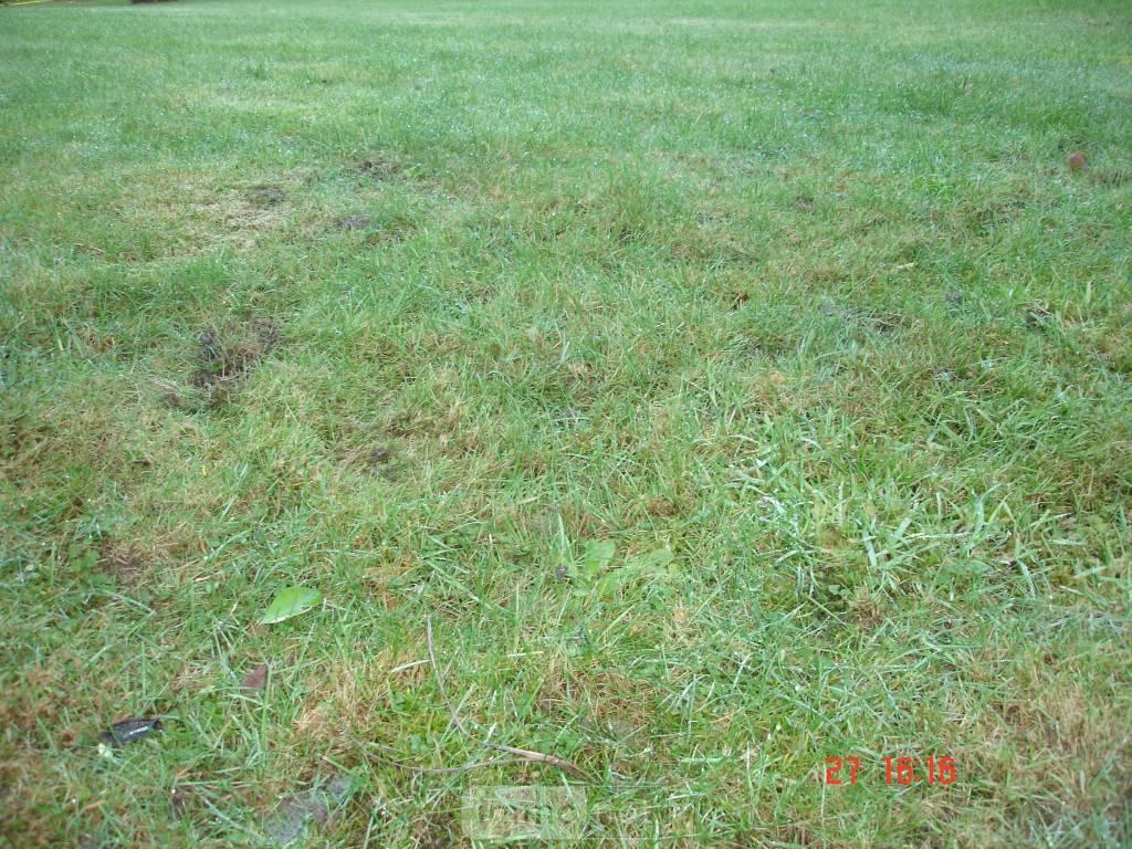 Terrain a batir a vendre Meslan 56320 Morbihan 277 m2  13780 euros