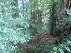 Terrains de loisirs bois etangs a vendre Montours 35460 Ille-et-Vilaine 5276 m2  19080 euros