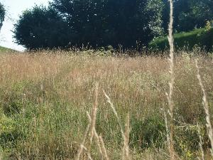 Terrain a batir a vendre Louvigné-du-Désert 35420 Ille-et-Vilaine 718 m2  15900 euros
