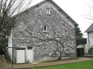 Maison a vendre La Chaussée-Saint-Victor 41260 Loir-et-Cher 98 m2 5 pièces 161022 euros