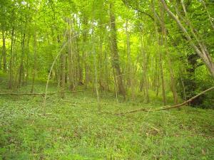 Terrains de loisirs bois etangs a vendre Mâle 61260 Orne 1850 m2  2650 euros