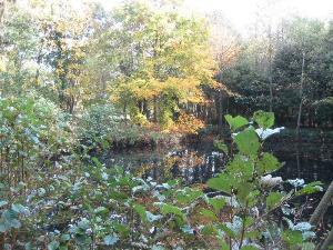 Terrains de loisirs bois etangs a vendre Saint-Célerin 72110 Sarthe 2000 m2  32860 euros