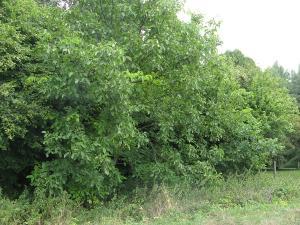 Terrains de loisirs bois etangs a vendre Courtisols 51460 Marne 1084 m2  6890 euros