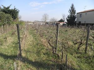 Terrain a batir a vendre Meschers-sur-Gironde 17132 Charente-Maritime 1127 m2  92200 euros
