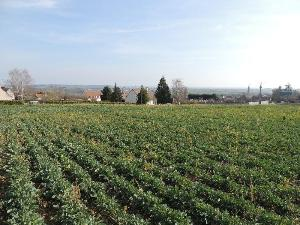 Terrain a batir a vendre Saulcet 03500 Allier 1500 m2  20000 euros