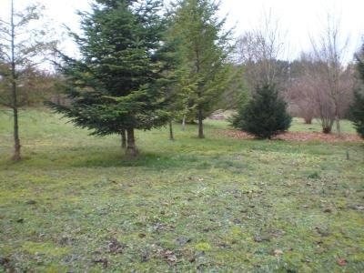 terrain boise a vendre 65