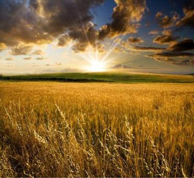 Bien agricole a vendre La Bazouge-des-Alleux 53470 Mayenne  42400 euros