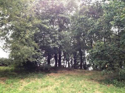 Terrains de loisirs bois etangs a vendre Réminiac 56140 Morbihan 11520 m2  26500 euros