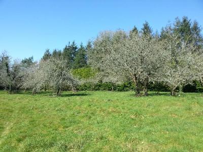 Terrain a batir a vendre Pluvigner 56330 Morbihan  37400 euros