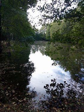 Terrains de loisirs bois etangs a vendre Bouër 72390 Sarthe 8200 m2  26500 euros